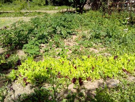 jardin potager gite lisa breil sur roya