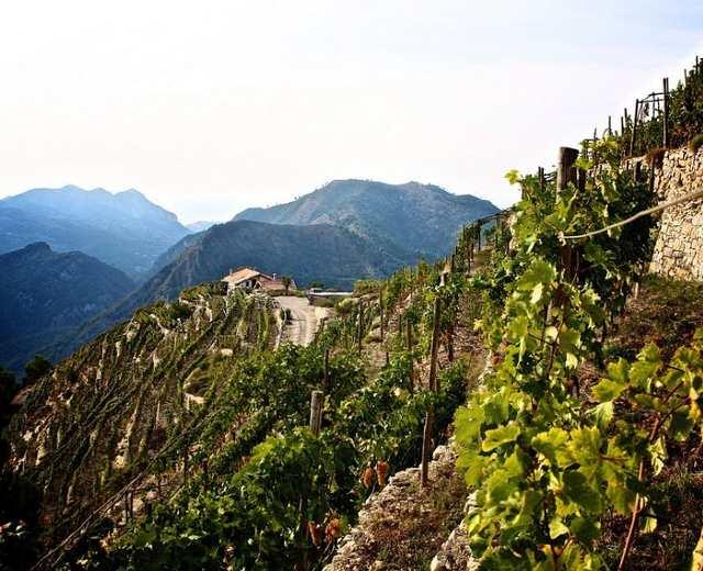 Vignoble Bio Vallée De La Roya